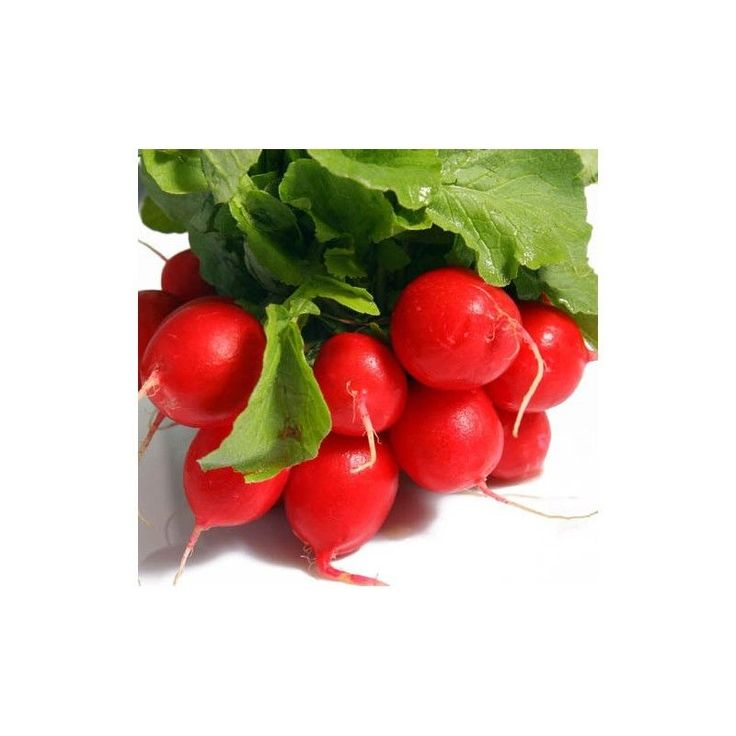 Radish Seeds - PERFECTO - Easy to Grow, Perfect Shape - 100 Seeds #theseedhouse