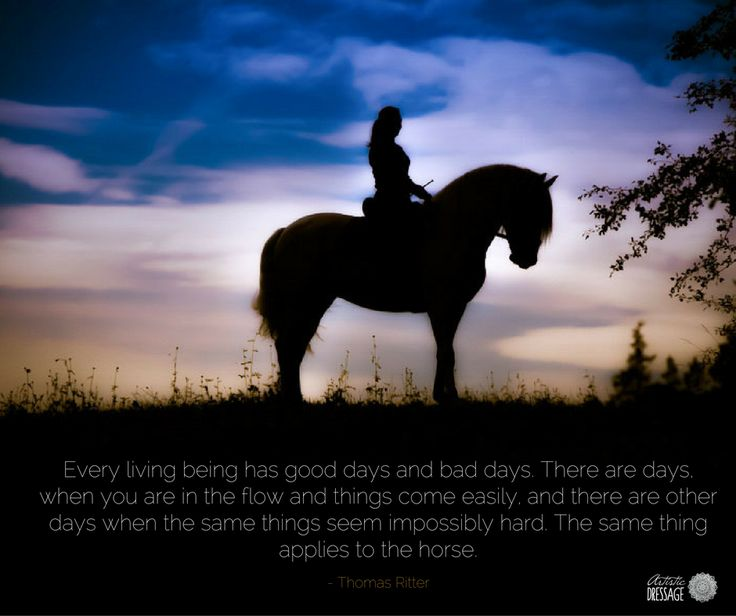 Every living being has good days and bad days. There are days, when you are in the flow and things come easily, and there are other days when the same things seem impossibly hard. The same thing applies to the horse. - Thomas Ritter  Have you joined our newsletter? http://eepurl.com/bYdIm5