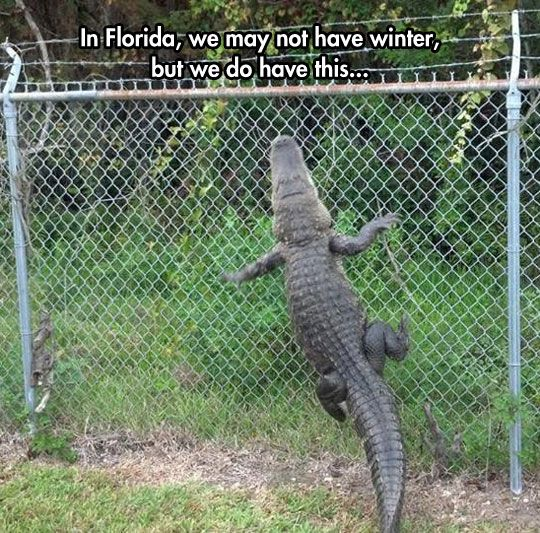 Florida: The Australia of America // funny pictures - funny photos - funny images - funny pics - funny quotes - #lol #humor #funnypictures: