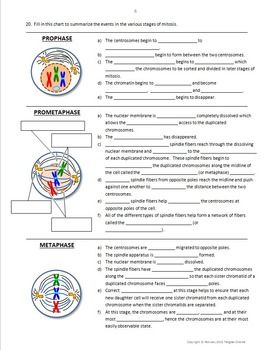 Mitosis and the Cell Cycle Interactive PowerPoint With Not