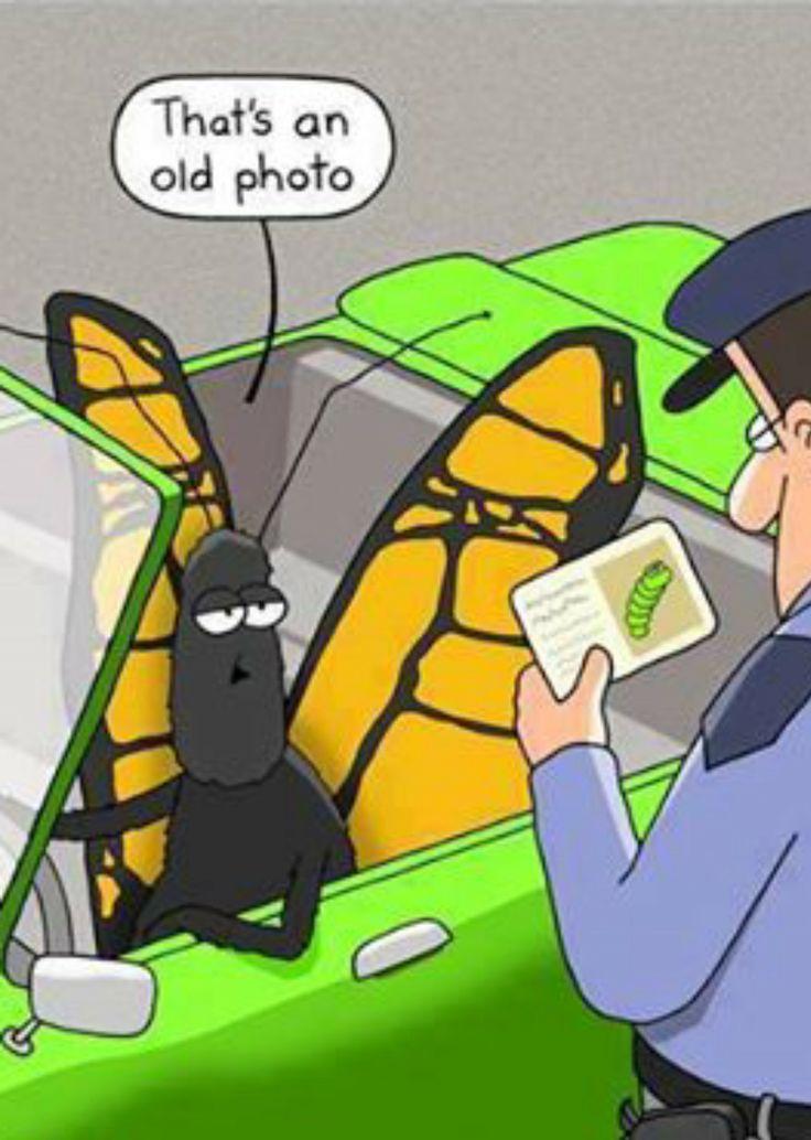 Butterfly ID
