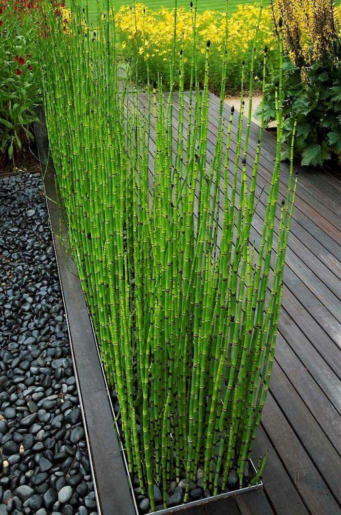 jardin paysager, paysager son jardin avec bambou