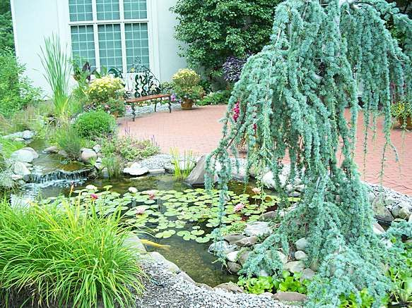 17 best ideas about coy pond on pinterest koi ponds for Pond shade ideas