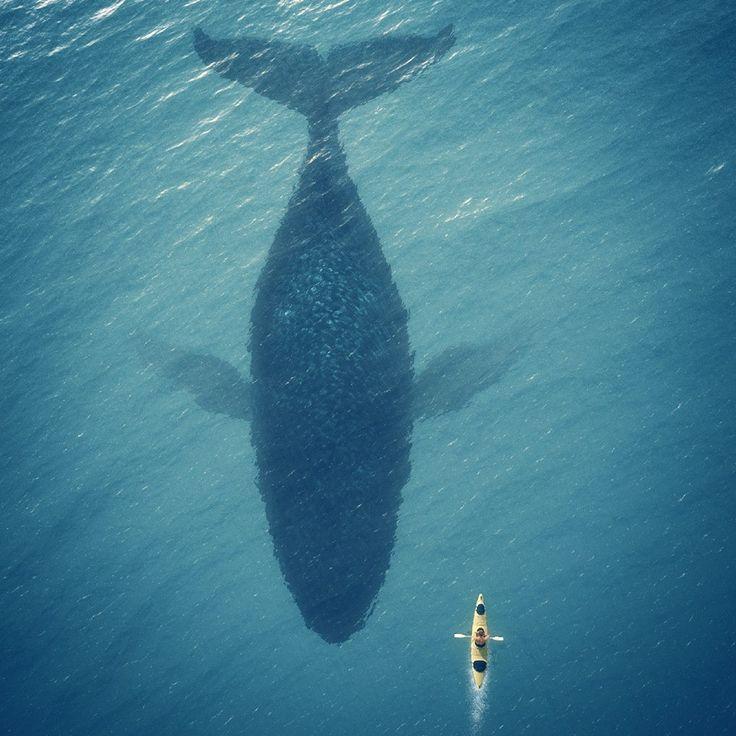 Kayak de mer, baleine