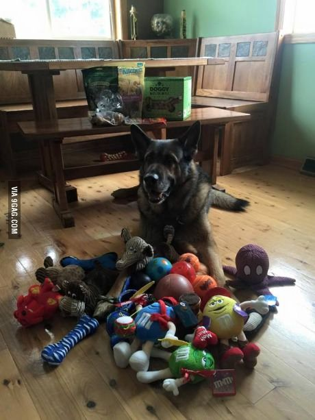 Police dog is given retirement presents from the community on his last day on the job
