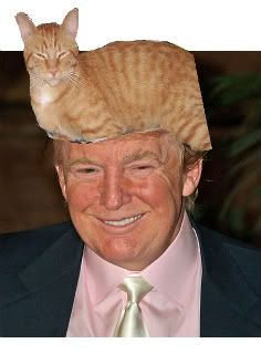 Bildergebnis für Donald Trump and cats