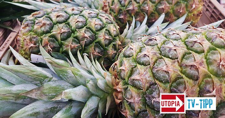 Eine Ananas ist lecker. Doch mit den süßen Früchten landen EU-verbotene Gifte auf dem Teller – in Costa Rica vergiften Pestizide Grundwasser und Arbeiter