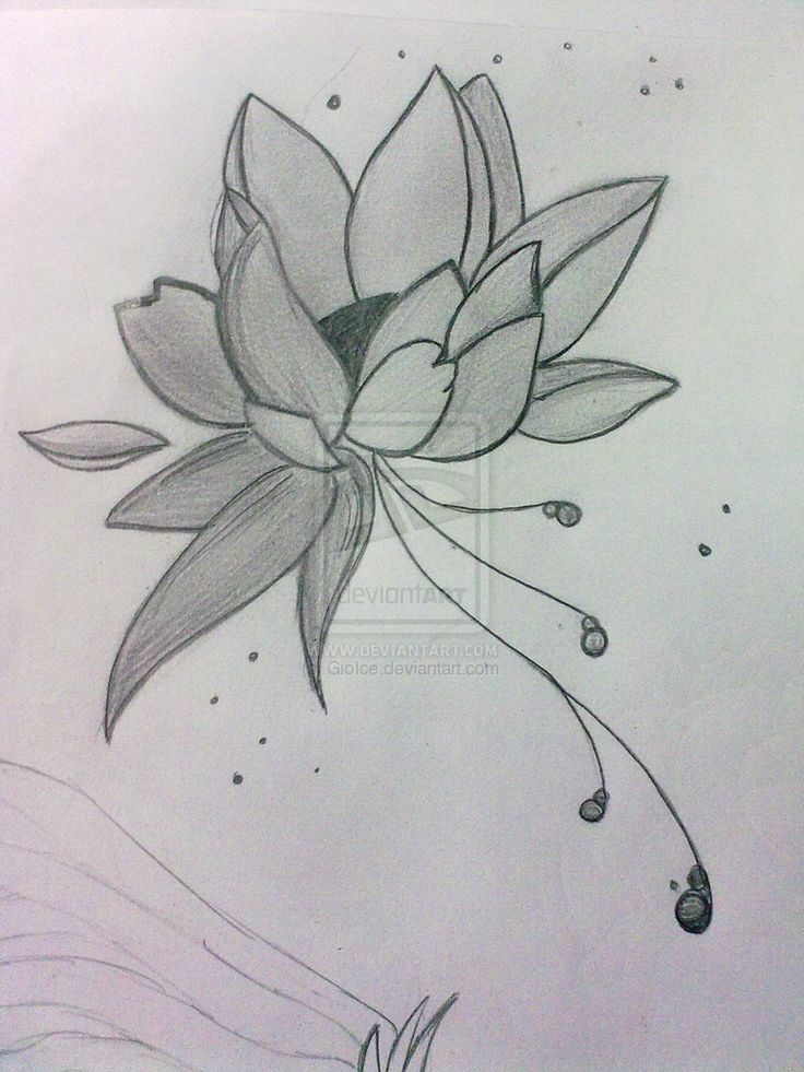 16 best scenery drawings images on pinterest scenery drawings lotus flower drawing art drawings landscapes scenery lotus flower silly sketch draw ccuart Images