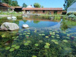 Hvordan bygge et naturlig basseng