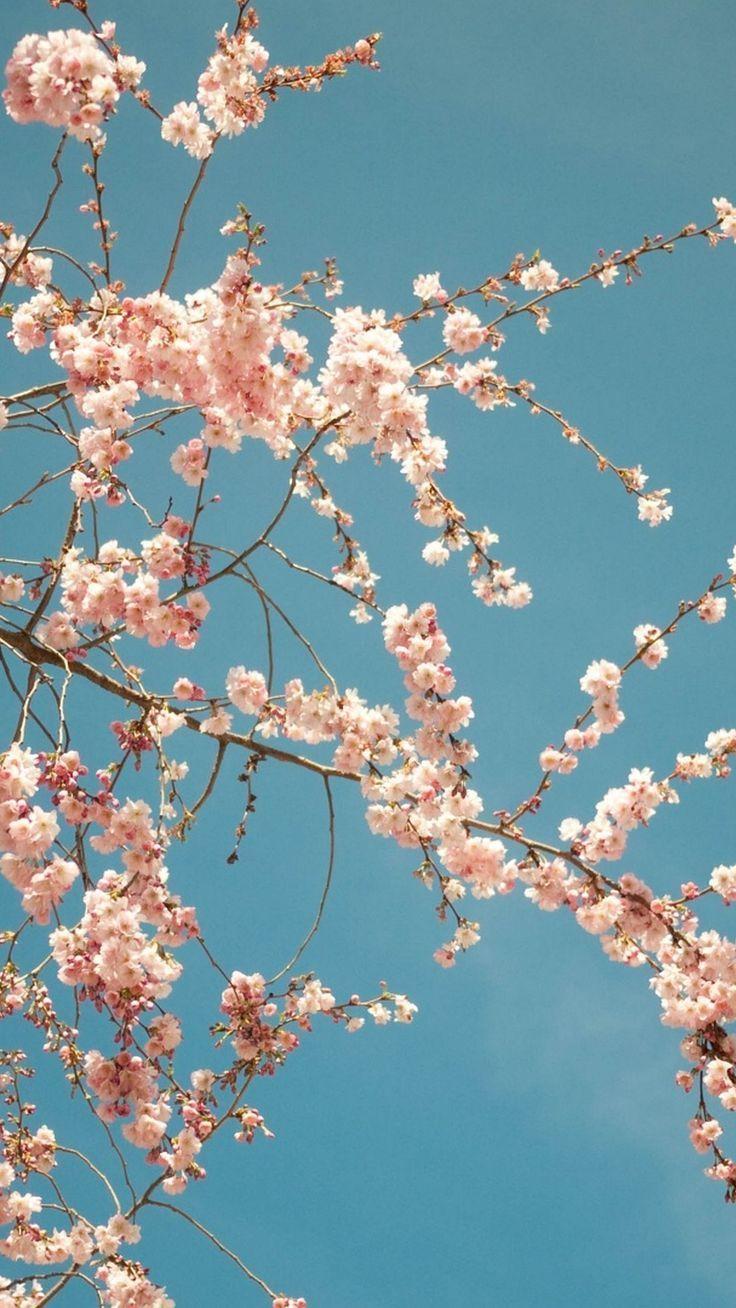 Spring Iphone Wallpaper Hd Best Wallpaper Hd Iphone