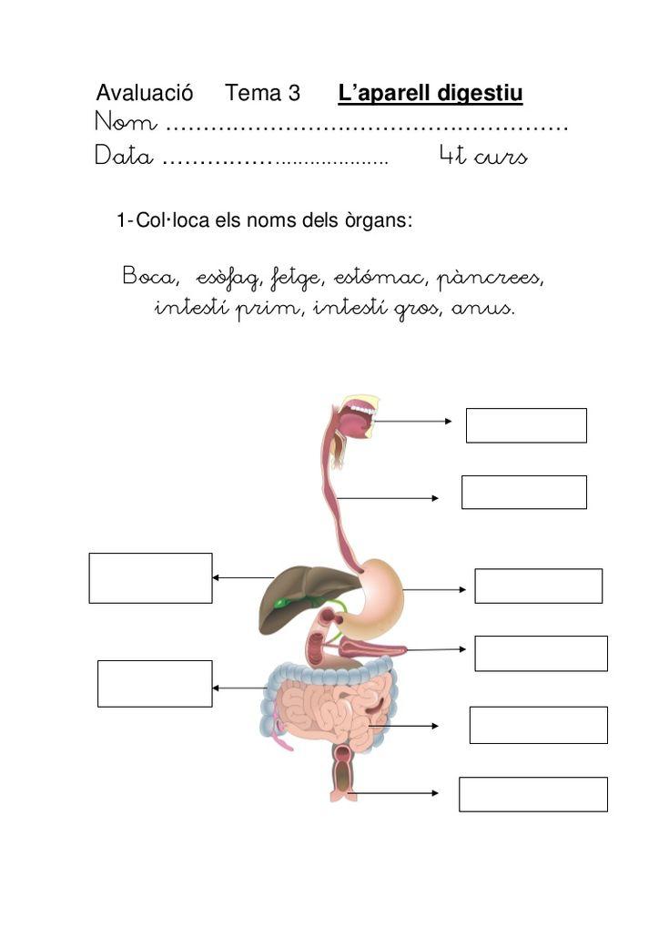 aparell-digestiu-avluaci by maica29 via Slideshare
