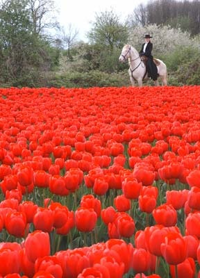 Gypsy Living Traveling In Style  Serafini Amelia  Portugal-Lusitano horse.