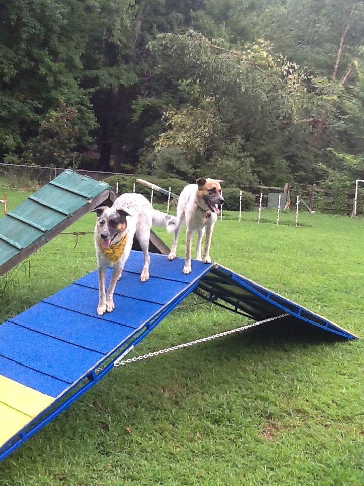 209 best Dog Agility Equipment images on Pinterest | Dog agility ...