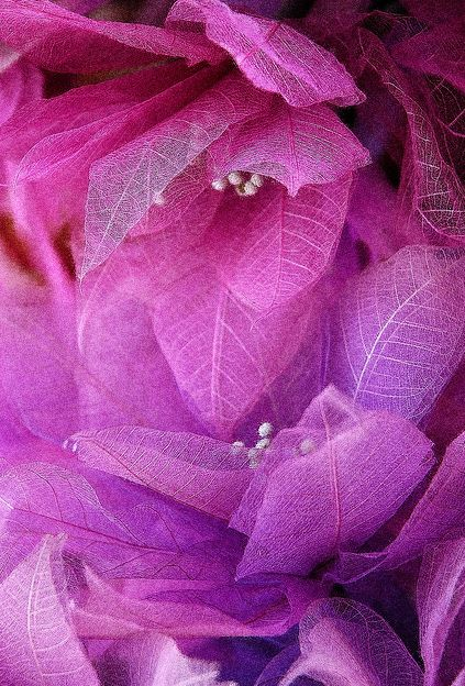 Radiant orchid leaves.