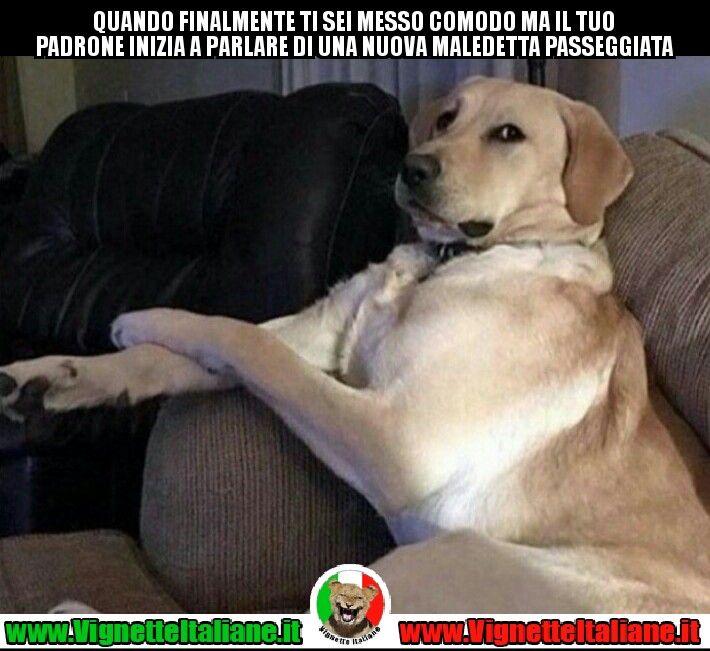 Il #cane #stanco  #vignetteitaliane.it #vignette #italiane #immagini #divertenti #lol #funnypics #umorismo #humour #ridere #risate #cani