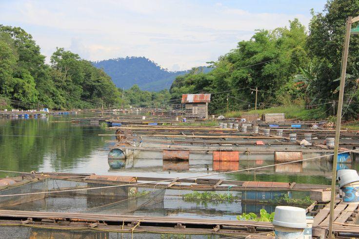 Keramba Ikan Sungai Desa Aranio