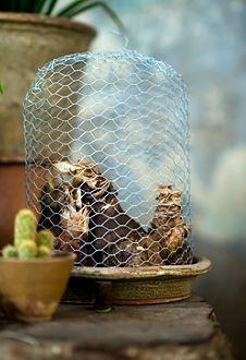 STOLP Planten worden verheven tot kunst onder een stolp. Bijvoorbeeld onder onze glazen stolpen. Maar ook deze 'stolp' van kippengaas mag er zijn. Weliswaar een ietwat ruigere uitstraling, maar toch erg verfijnd wat ons betreft... Het vergt wel wat geduld om het gaas in zo'n mooi bolle vorm te buigen. Gebruik een andere stolp als mal.