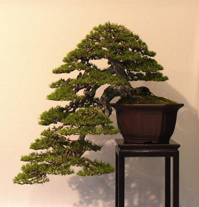 Bonsai Pots Indoor Bonsai Japanese Bonsai Tree Bonsai Art