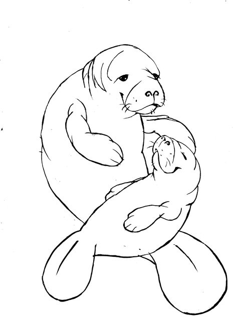 Line Art Tattoos Florida : Best images about manatees on pinterest sterling