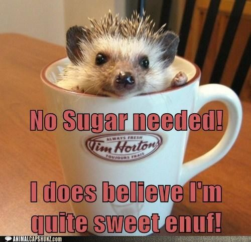 Funny Animal Pictures with Captions   funny-animal-captions-no-sugar-needed-i-does-believe-im-quite-sweet ...