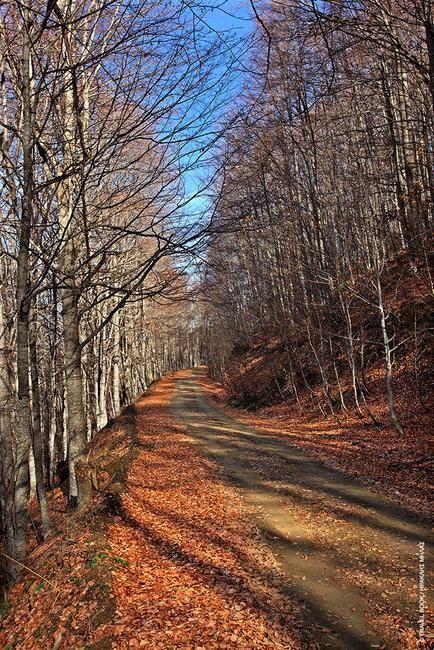 «Περπατάω εις το δάσος όταν ο λύκος δεν είναι εδώ»; Μην είσαι και σίγουρος στα δάση του Βιτσίου