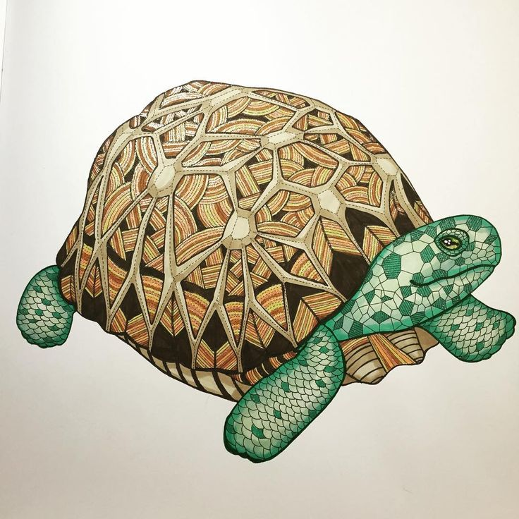 Used Promarkers Polychromos And Glitter Gelpens Animal Kingdom By Millie Marotta Colouring Book