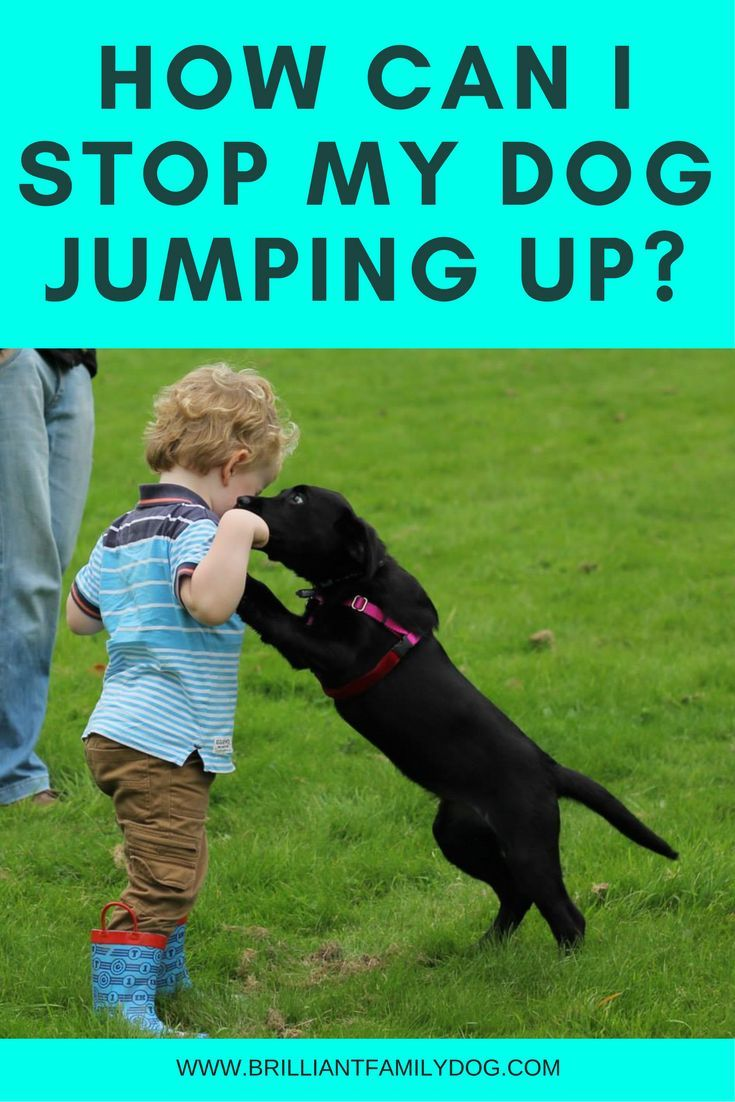 How can i stop my dog jumping up brilliant family dog