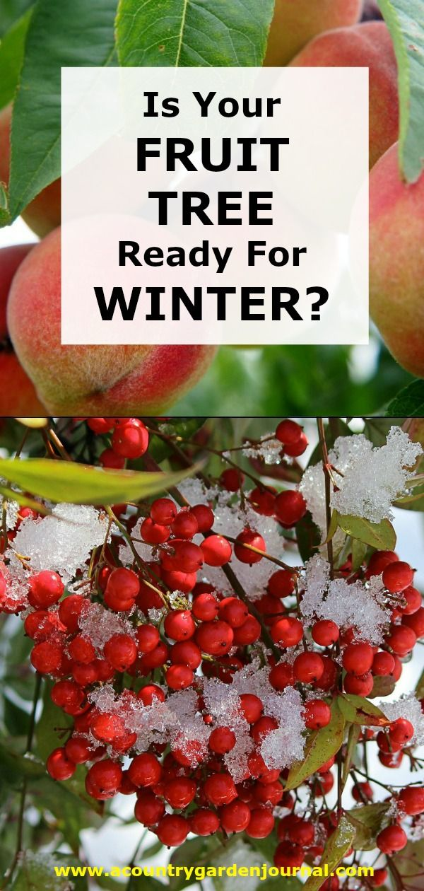 Is Your Tree Ready For Winter Fruit Trees Trees To Plant Growing Fruit Trees