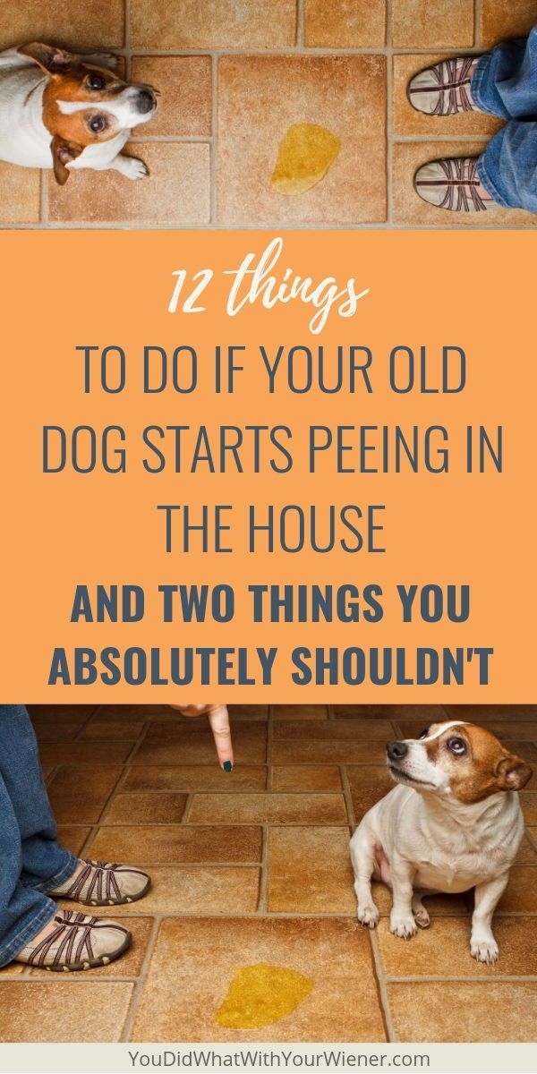 It Can Be Really Frustrating When Your Old Dog Who Was Previously