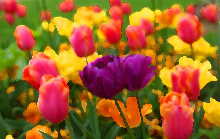 Tulips in Paris. Photoartists.ca All images are available for purchase. We print on photographic paper or watercolour paper. We also print on canvas and cotton for stretchers. If interested in any of my works please email me at Brian@photoartists.ca Images are also available in trip tics and doubles (one image cut into 2 or 3 and gallery wrapped) to be displayed together.