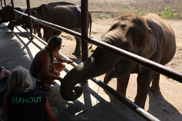 Volunteer with elephants at Elephant's World in Asia