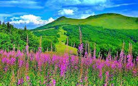 Beautiful Nature - Google Search