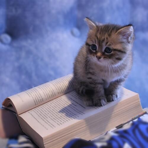 Cats and books. The two things that relieve the misery of life. …