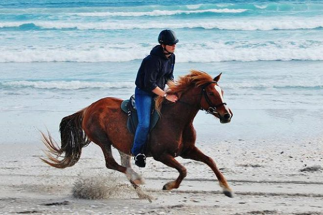 Horse riding on the beach in Hermanus