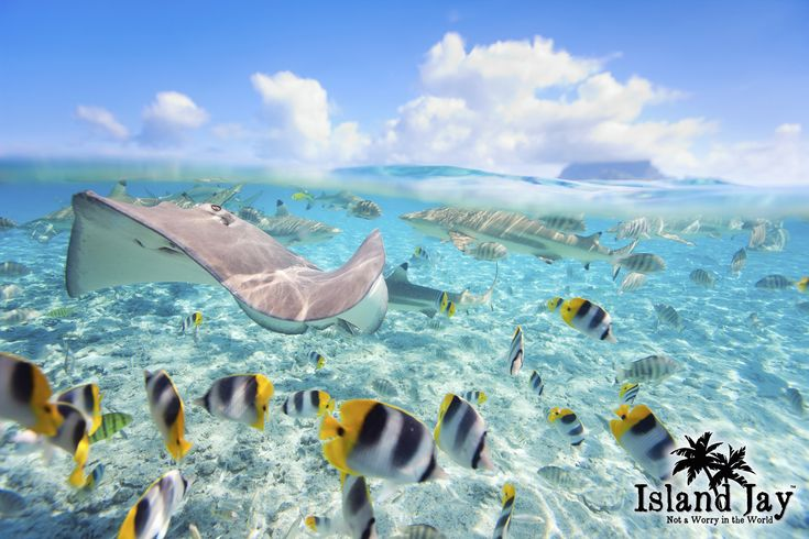 Caribbean Sea Animal Life: 1000+ Images About Caribbean Animals & Sea Life On
