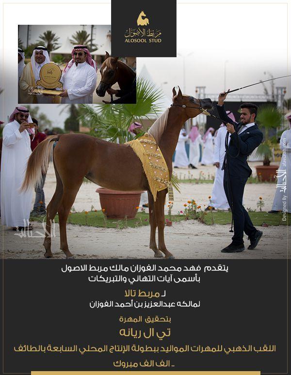 مربط الأصول يهنئ مربط تالا على ذهب الإنتاج المحلي Horses Animals Arabians