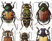 Klasická Chrobáky umenie ilustrácie - Bug Chrobáky Divné veci Závesné vzorky Zberatelia Display - Digitálna fotografia - Instant na stiahnutie