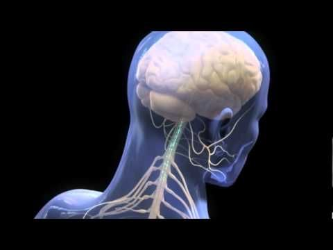 Central Nervous System Mechanisms of Pain Modulation - YouTube
