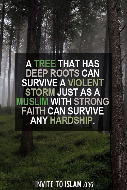 A tree that has deep roots can survive a violent storm just as a Muslim with strong faith can survive any hardship.