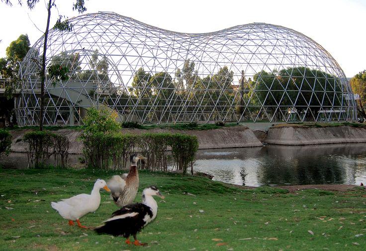 free bird aviary