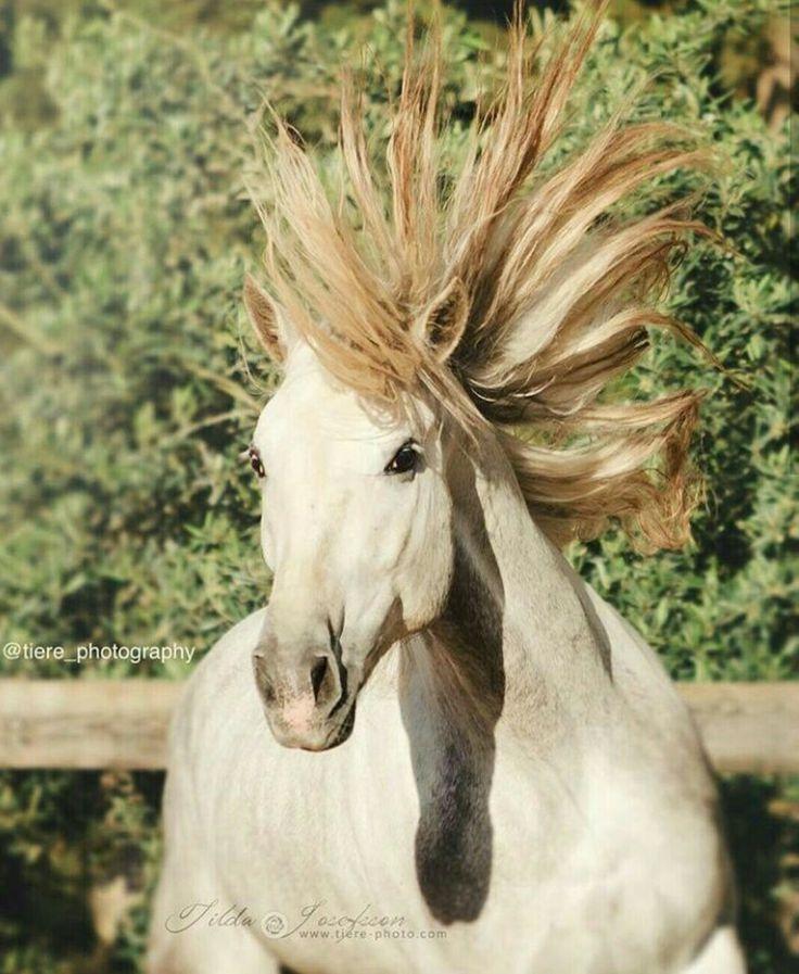 femmes seules à la recherche dentreprise cheval gris pommele a vendre