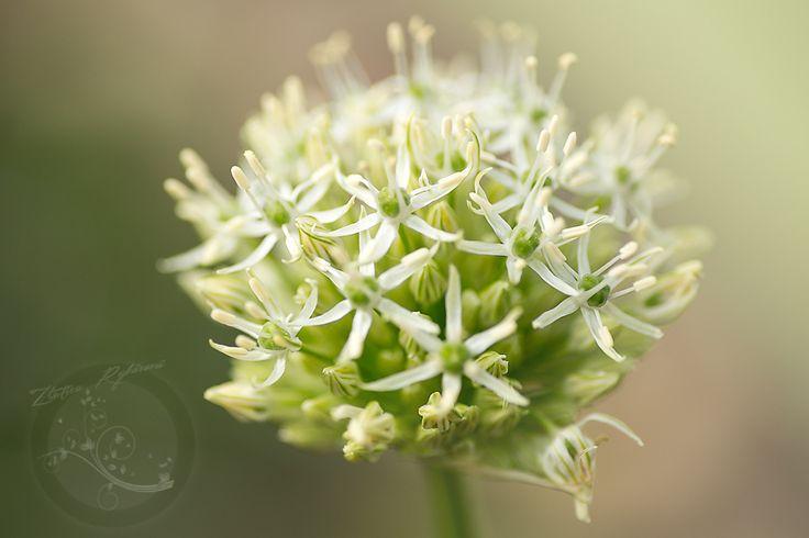 blossom by Zlatica Rybárová on 500px