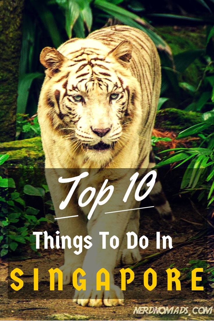 Top 10 Things To Do In #Singapore! http://nerdnomads.com/top-10-things-singapore