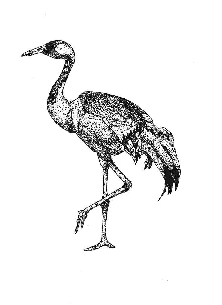 heron bird illustration