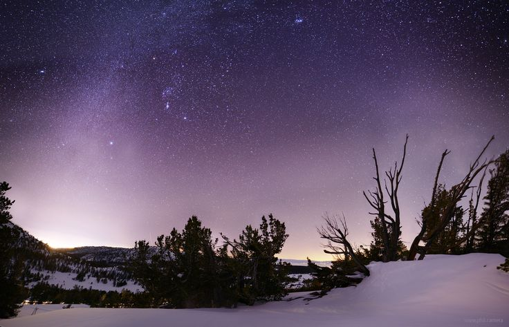 Winter Night Sky over The Mt Rose / Sheep Flat meadow last night with Carson down to the left and Lake Tahoe peaking through the branches center-right. One of the most technically challenging photos Ive ever taken. [oc][30001928] #reddit