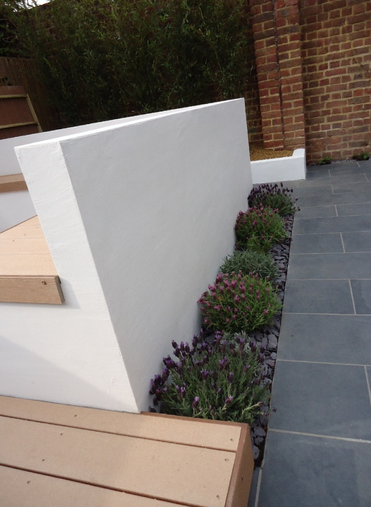 contemporary mixed lavender hedge