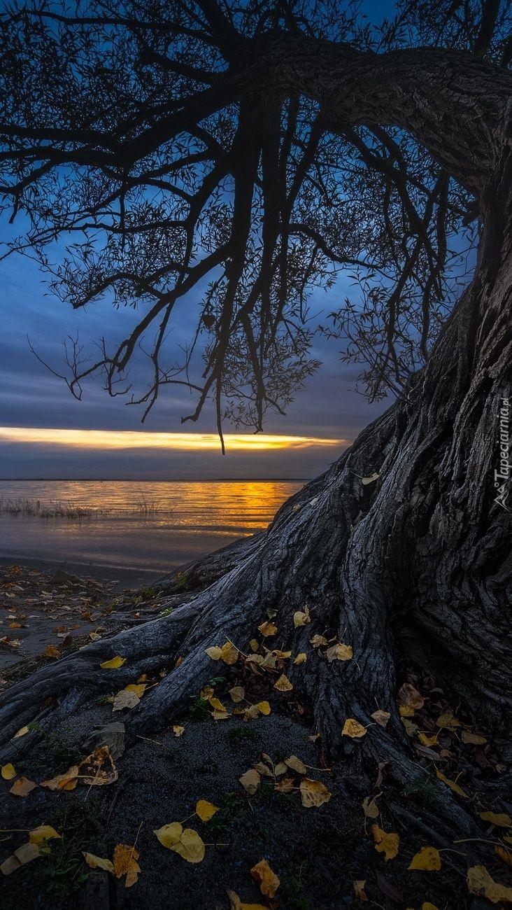 Jesienne Drzewo Na Brzegu Jeziora Tapeta Na Telefon Nature Photography Scenery Nature