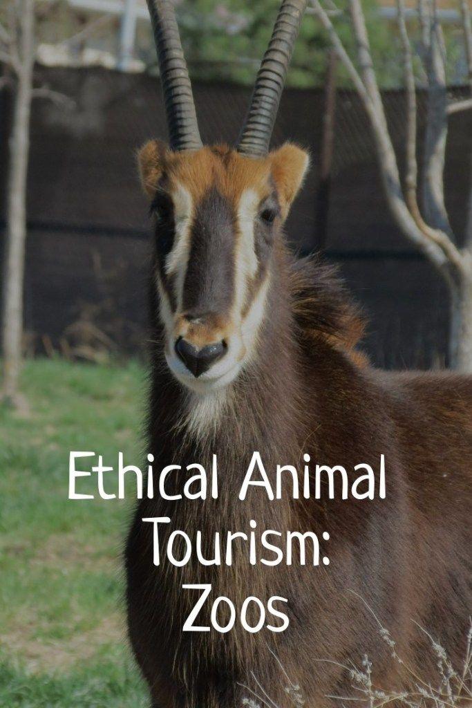 Ethical Animal Tourism Zoos Animals Zoo Tourism