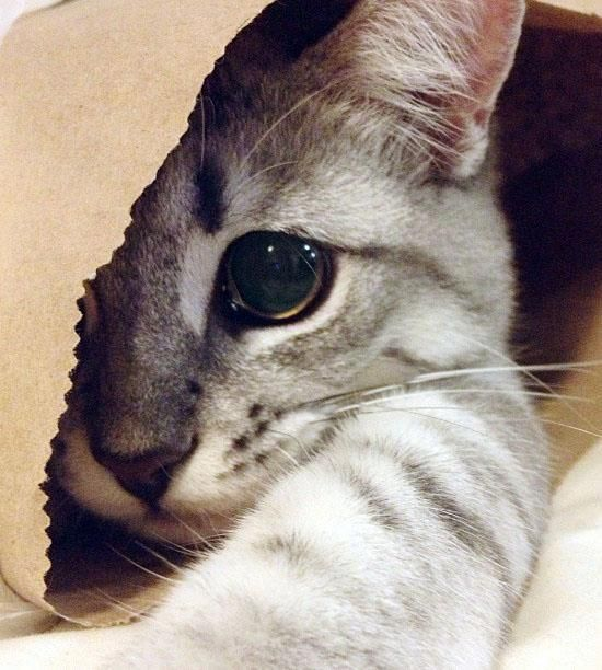 A cat, in a bag – who would have thought it!