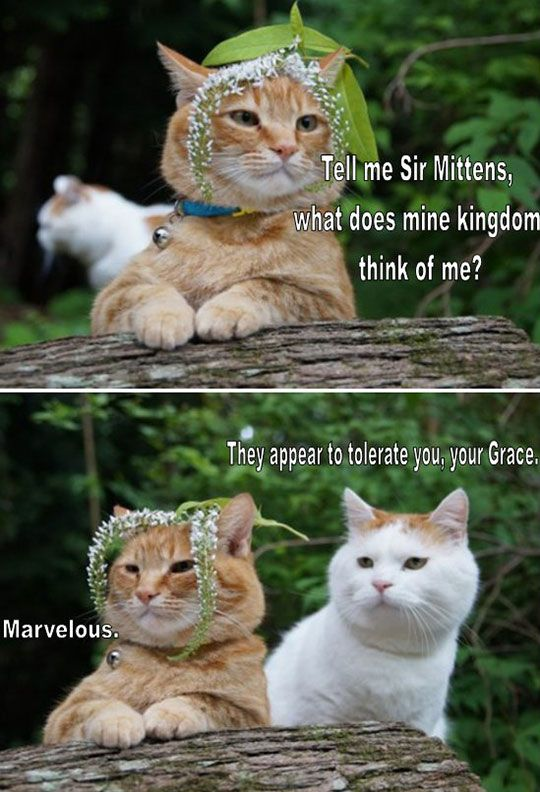 Fetch Me My Catnip, Sir Mittens